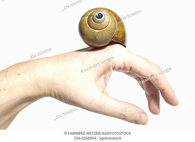 Hand holding a spiral shell