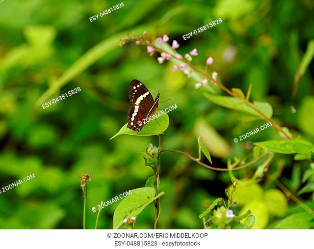 Jungle butterfly, Bosque del Cabo, Costa Rica