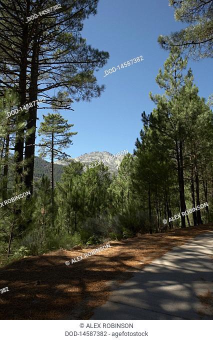 Spain, Sierra de Gredos, Almanzor peak, View of road with peak at background