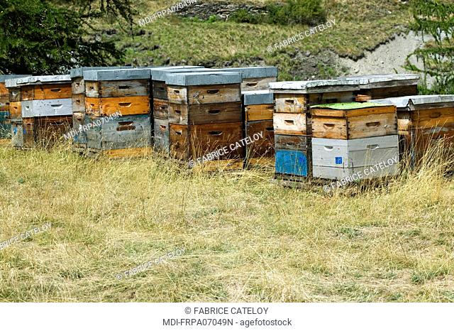 Hives in the natural regional park of Queyras