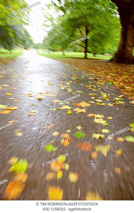 Low view of path through park in autumn
