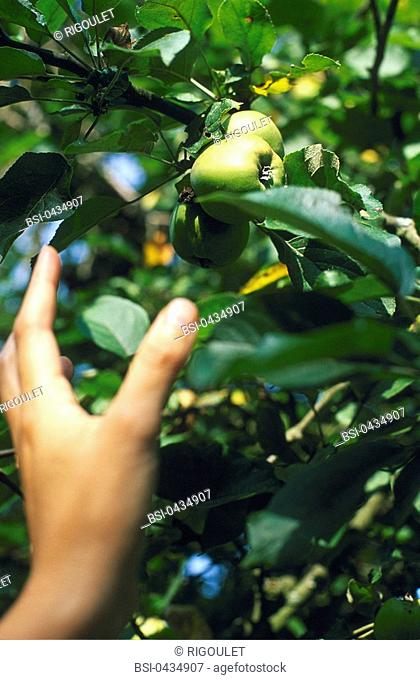 APPLE TREE Symbolic illustration of human beings relationship with their natural environment