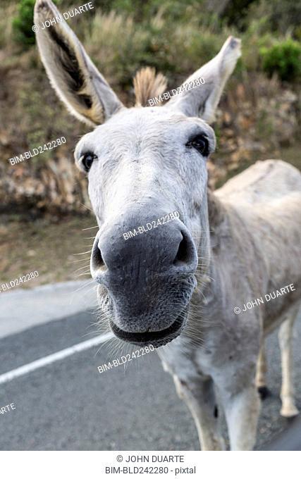 Close up of nose of donkey