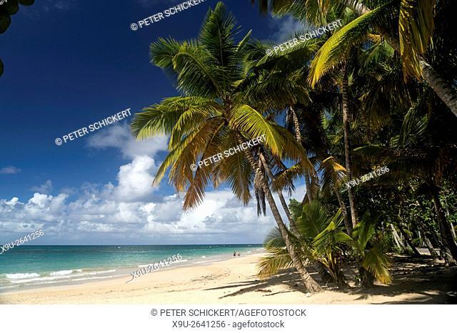 palm fringed beach in Las Terrenas, Samana peninsula, Dominican Republic, Carribean, America,