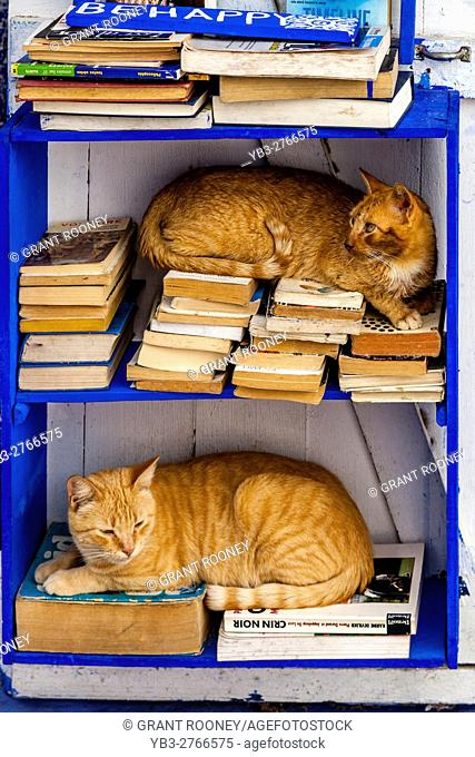 Two Cats Sitting In A Bookcase Outside A Local Artist's Shop, Asilah, Morocco