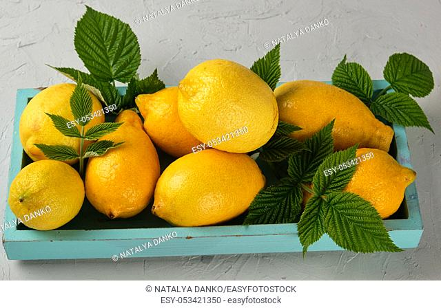fresh ripe whole yellow lemons on a blue wooden board, ingredients for making summer drinks, top view