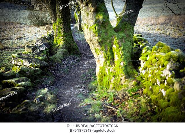 UK, England, North Yorkshire, Yorkshire Dales, foot path in the forest
