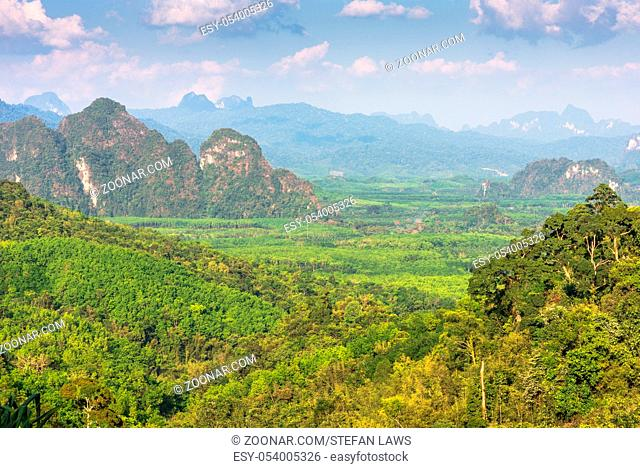 View over oil palm and rubber tree plantations in the south of Thailand. In the background the mountains and the jungle of the Khao Sok national park