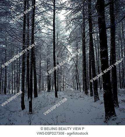 Snow road of Great Khingan in Heilongjiang province, China