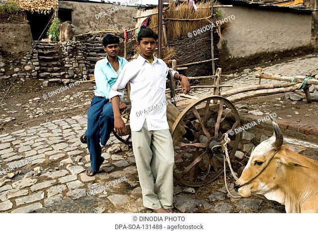 Boys standing near bullock cart ; Marathwada ; Maharashtra ; India
