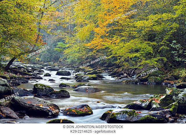 Autumn foliage overhanging the Little River, Great Smoky Mountains NP, Tennessee, USA