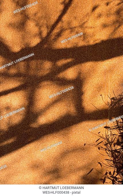 Germany, North Rhine-Westphalia, Aachen, corten wall, shadow of tree and bamboo