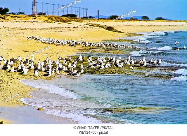 Birds gathering on the seaside in Kish Island, Iran