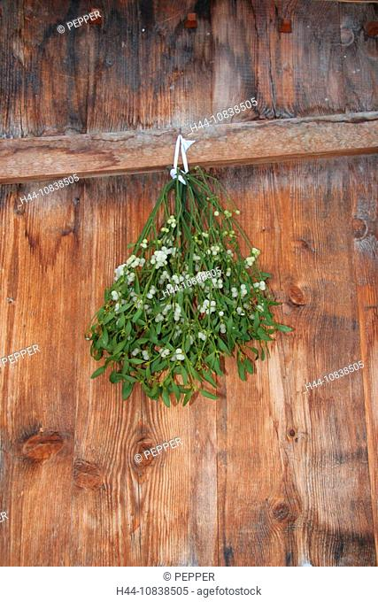 mistletoe, branch, branches, tradition, christmas, luck, door, mojo, talisman, lucky charm, superstition, belief, Siwt
