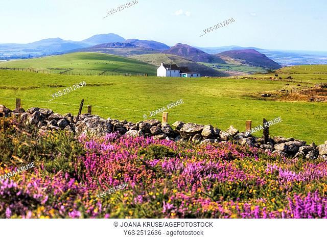 Llanaelhaearn, Llyn Peninsula, Snowdonia, Wales, United Kingdom