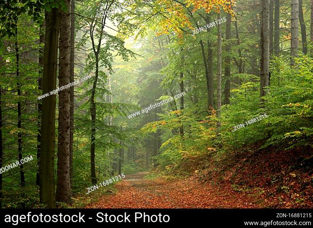 Path through the autumn forest on a foggy weather, Bischofskoppe Mountain, October, Poland