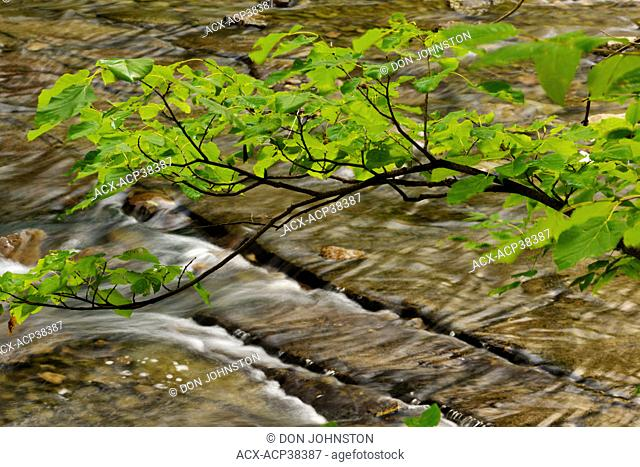 Tree branches overhanging the Kagawong River, Manitoulin Island, Ontario, Canada