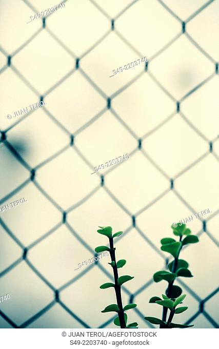 Plant and fence