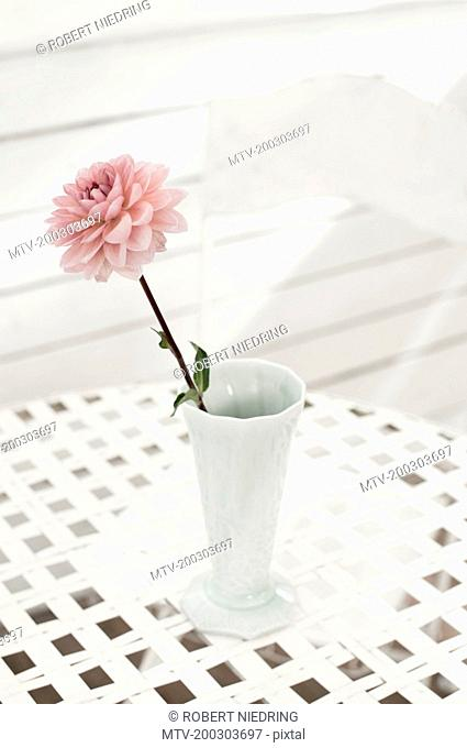 Pink peony flower in vase on table at glass house, Bavaria, Germany
