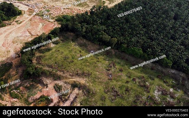 Deforest land at Malaysia in aerial view