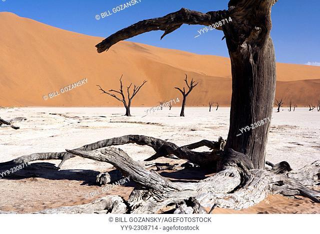 Dead Vlei in Sossusvlei National Park - Namib-Naukluft National Park, Namibia, Africa