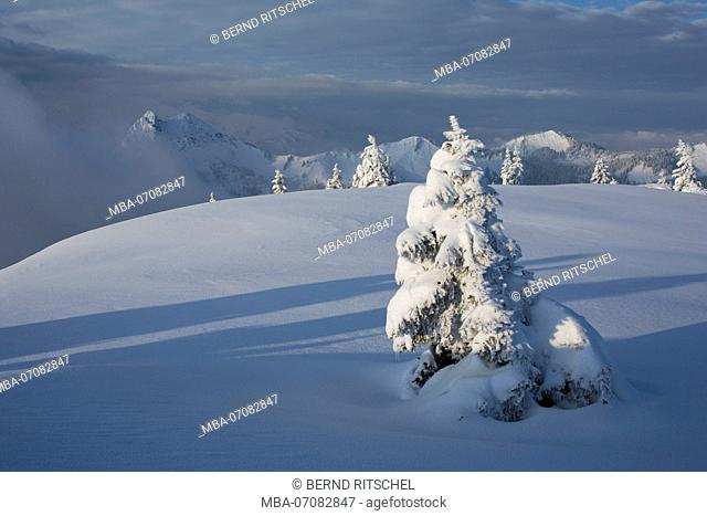 Morning mood at Hirschberg (mountain) in winter, Bavarian Alps, Bavaria, Germany