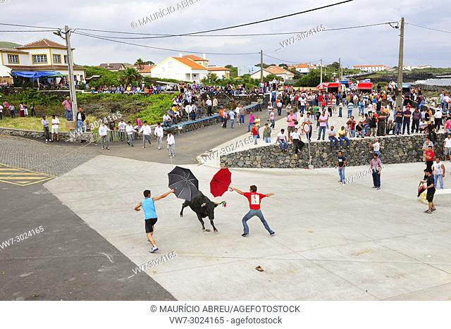 Bullfight (tourada á corda) in Porto Martins. Terceira island, Azores. Portugal