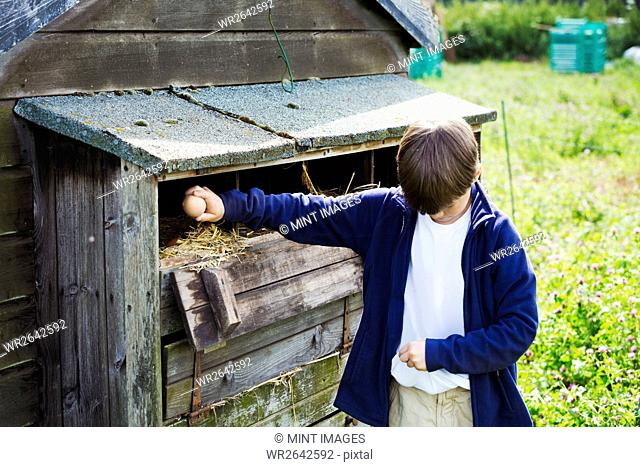 A boy collecting eggs from the henhouse coop