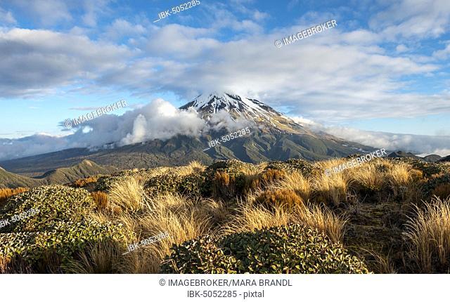 Stratovolcano Mount Taranaki or Mount Egmont, Egmont National Park, Taranaki, New Zealand, Oceania