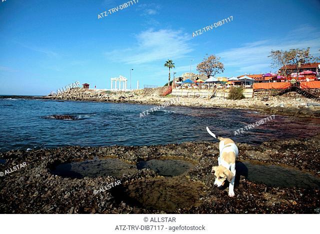 DOG, ROCK POOLS, CAFE & THE APOLLO TEMPLE; SIDE, TURKEY; 16/11/2007
