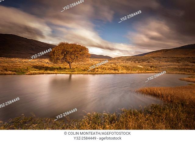 Willow tree reflection in pond, windy autumn day, Nevis valley, Central Otago