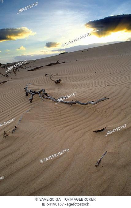 Sand dunes, dawn, Boavista, Cape Verde
