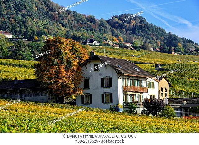 autumn landscape, canton Vaud, Switzerland