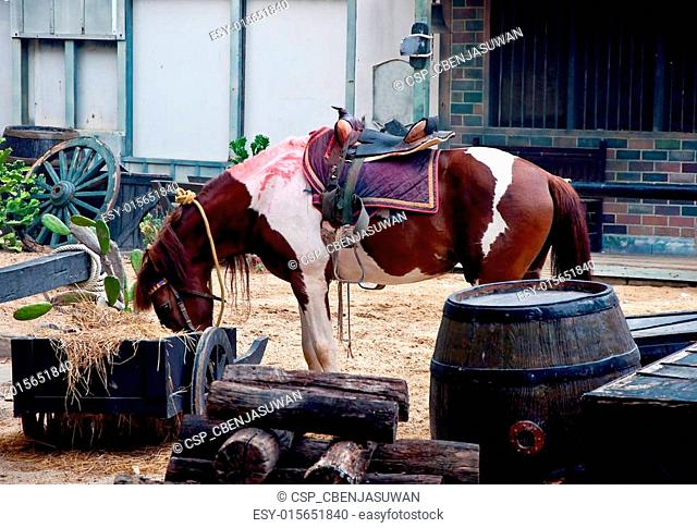 The Horse eating hay