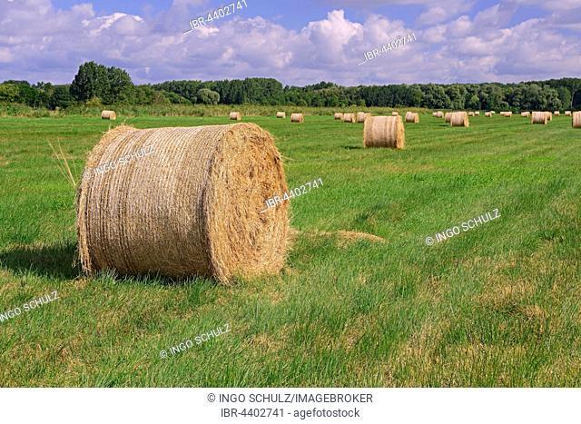 Straw bales in a meadow, Brandenburg, Germany