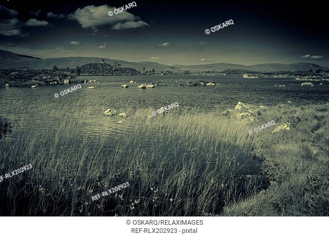 Panorama lake moor reeds black and white islands