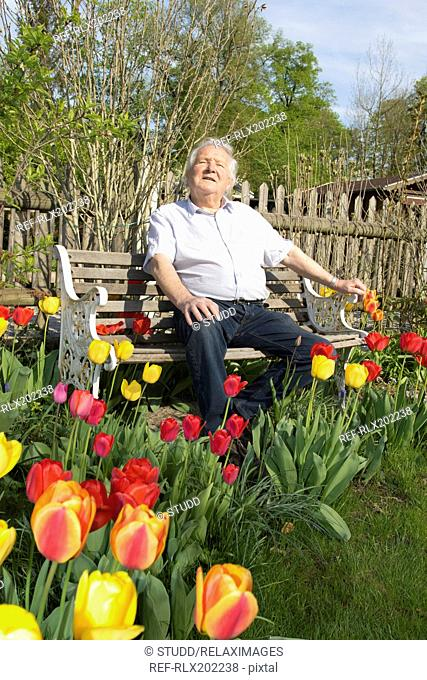 Senior man relaxing on park bench surrounded by tulips in garden