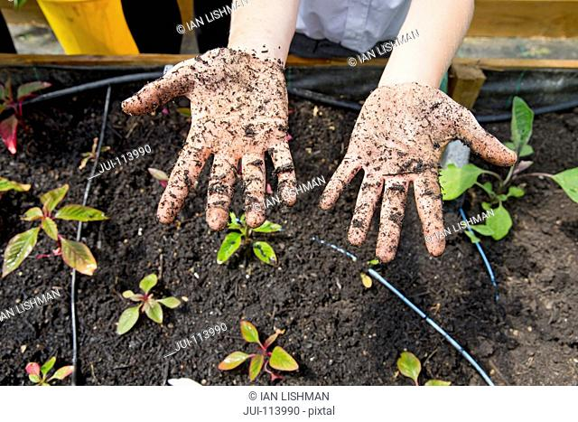 Middle schoolboy with dirty potting soil hands gardening planting plants
