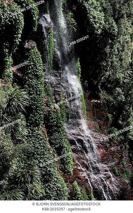 Coomera Falls. Lamington National Park, Queensland, Australia