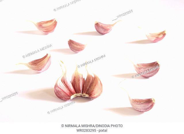 Indian spice , Garlic cloves Lahsun Allium sativum on white background