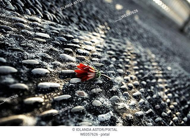 Flower on the street