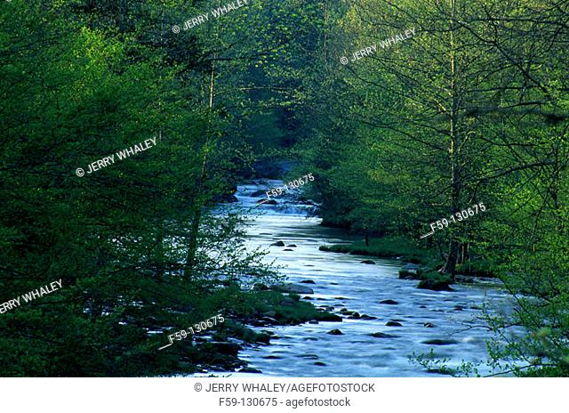 Little Pigeon River. Great Smoky Mountains National Park. Tennessee. USA