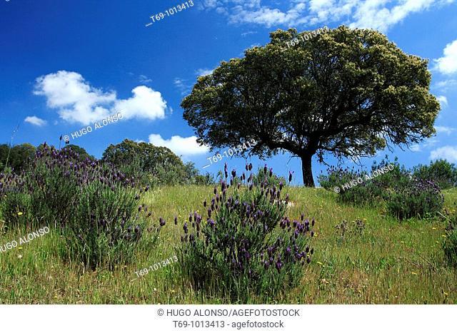 Monfrague Natural Park. Caceres province. Extremadura. Spain