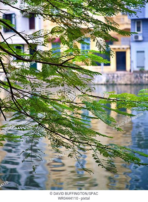 View of Buildings and Water through Tree Branches