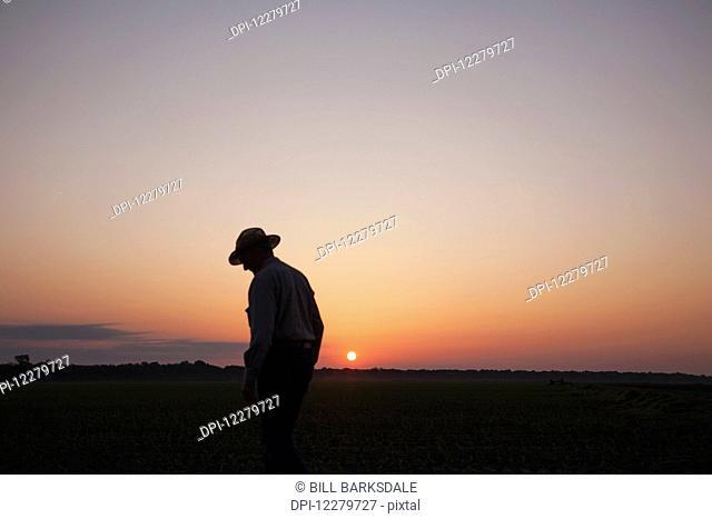Farmer checking his field of seedling corn as sun rises; England, Arkansas, United States of America