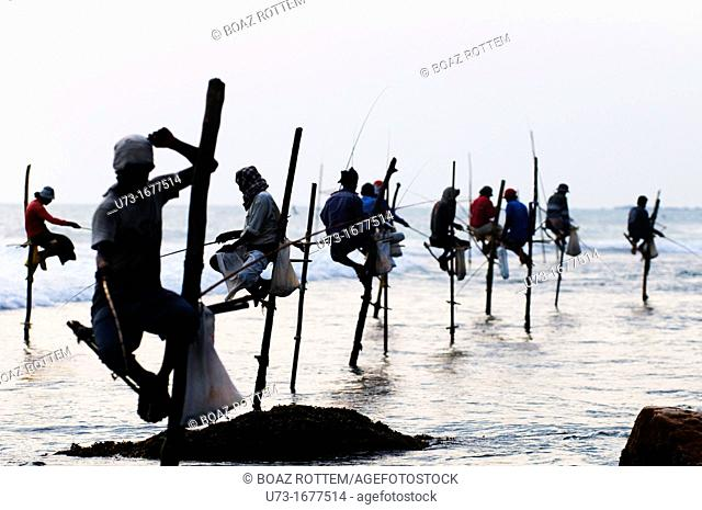 Stilt fishermen perched on their poles in Midigama, Sri Lanka