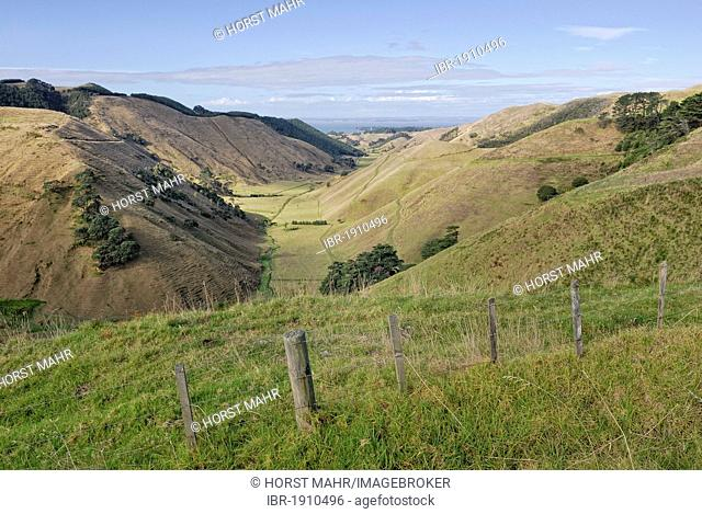 Valley and pastures on the Lees Gully Road, Manukau Peninsula, North Island, New Zealand