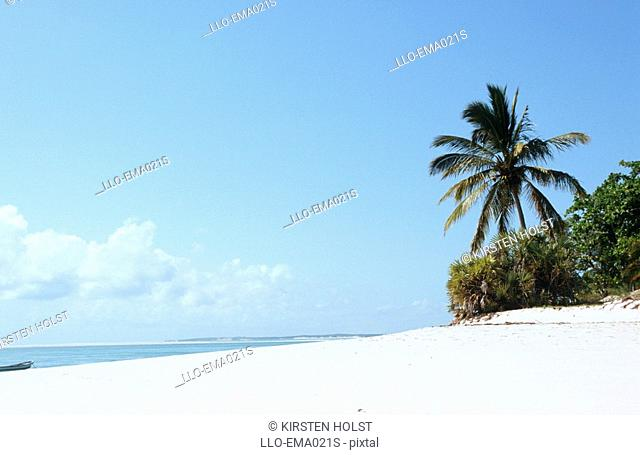 Scenic View of Beach and Palm Tree  Bazaruto Island, Mozambique, Southern Africa