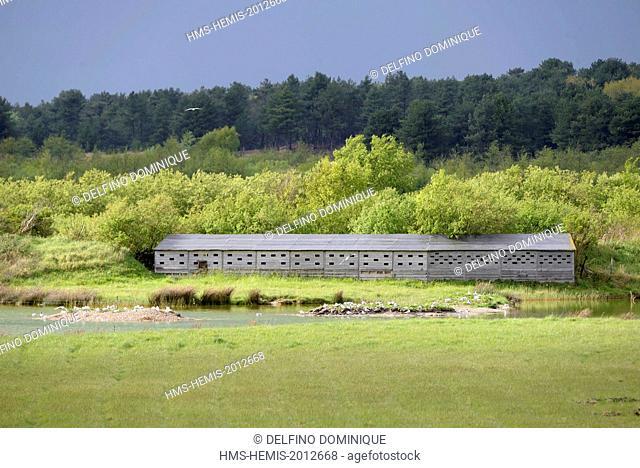 France, Somme, Baie de Somme, Saint Quentin en Tourmont, Marquenterre Park, public observatory before a swamp under a stormy sky