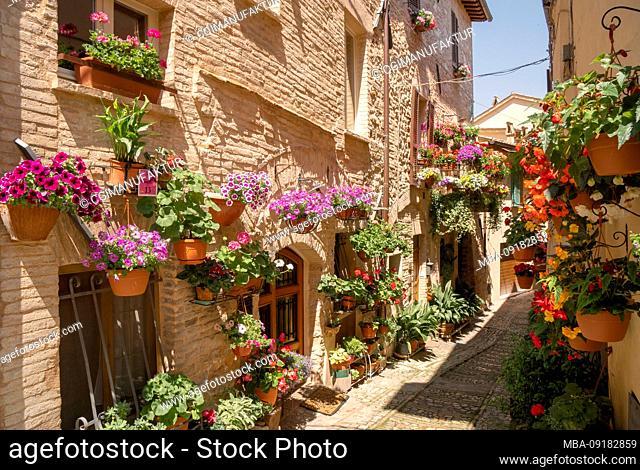 Flower splendor in Spello, Perugia province, Umbria, Italy